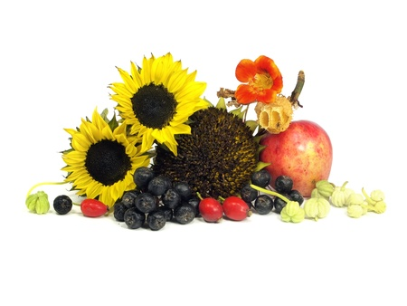 autumn still life on a white background 