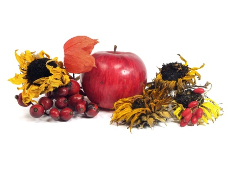 barbery: autumn still life on a white background