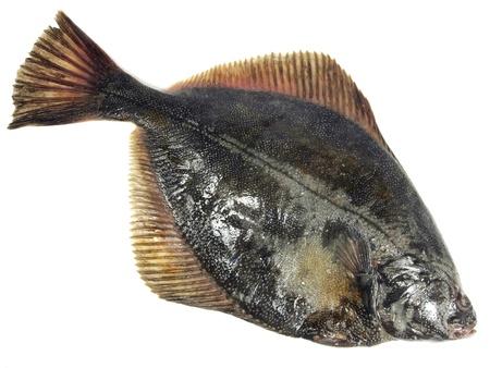 baltic flatfish on a white background photo