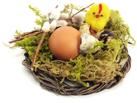 quail and chicken egg in nest on a white background      photo