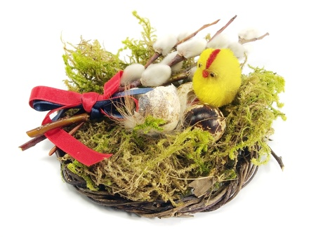 quail egg and chicken in nest on a white background      photo