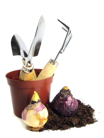 hyacinths bulbs, gardening tools and peat on white background