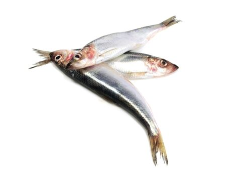 Fresh Baltic herring fish on white background 