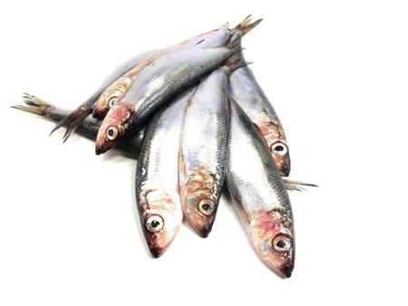 Fresh Baltic herring fish on white background     Stock Photo