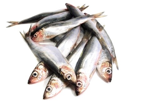 Fresh Baltic herring fish on white background     Stock Photo
