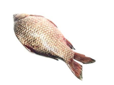 carassius - crucian carp on a white background Stock Photo - 13132786