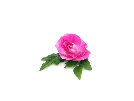 blooming impatiens flower on a white background  photo