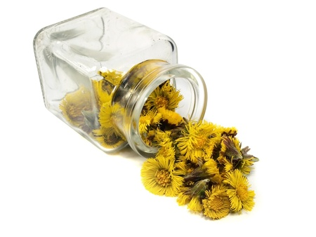 Colts Foot or Tussilago farfara in jar on a white background