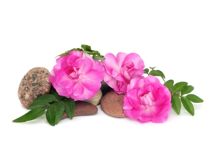 impatiens flowers and stones on a white background    photo
