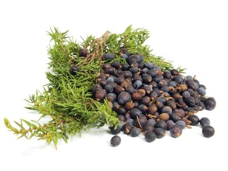 plantas medicinales: Juniper ramas y bayas sobre un fondo blanco