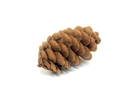 fir tree cones on a white background    photo
