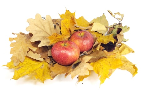 multicolored autumn leaves with organic apples on a white background   photo