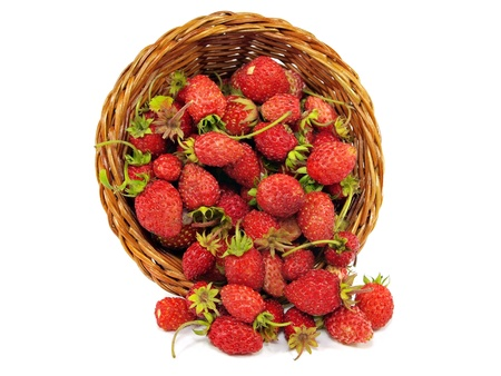 Red wild strawberry in wicker cornucopia on a white background    photo