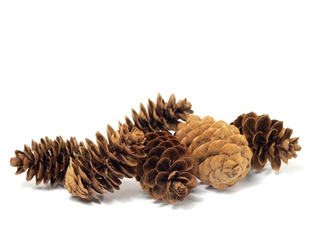 pine cone: fir tree cones on a white background