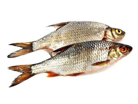 abramis: bream (abramis brama) and roach (Rutilus rutilus) on a white background
