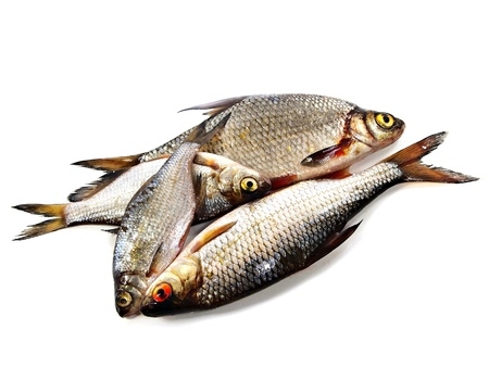 bream (abramis brama) and roach (Rutilus rutilus) on a white background 
