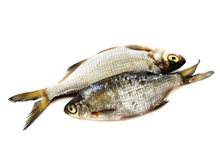 cypriniformes: bream (abramis brama) on a white background