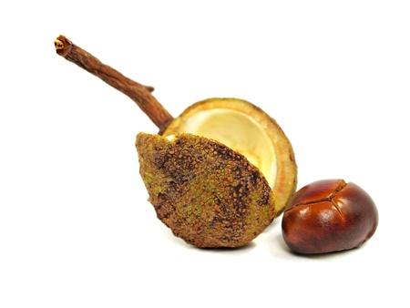 lustre: Chestnut on a white background