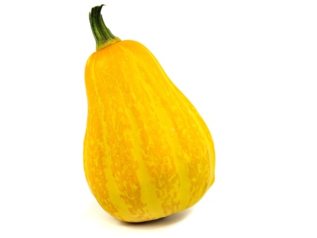 pumpkin vegetable on a white background         photo