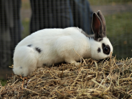 Cute rabbit on the hay       Stock Photo