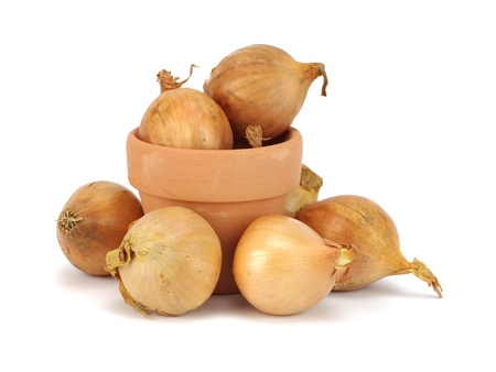 onion seeds for planting and clay flowerpots on white background photo