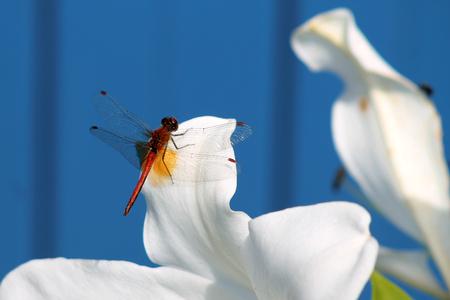 macro: Dragonfly, Macro dragonfly, dragonfly , insect, animal, nature,macro,bug.