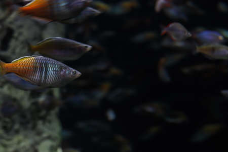 A lot of fish underwater on dark background with copy space.