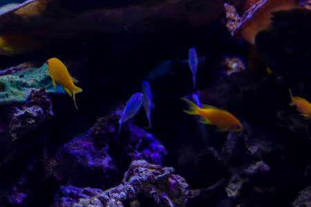 Ocean bottom. Flora underwater, ocean life. Background wuth copy space.