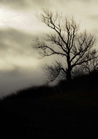 overcast: silhouette of a tree against an overcast sky Stock Photo