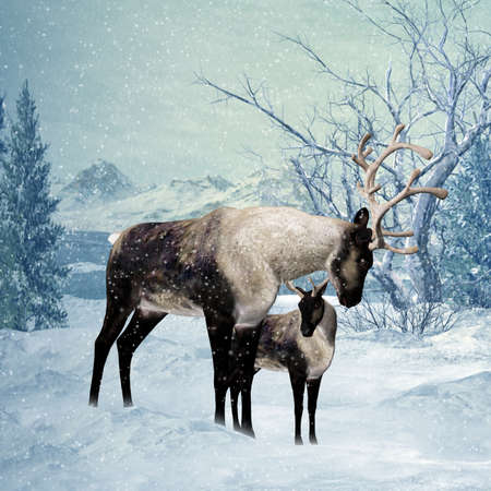 winter solstice: Reindeer and Fawn Winter Greeting Card