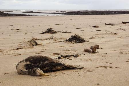 Dead Sea Bird On The Beach