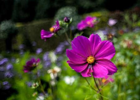Retro Style Abstract Photo Of A Summer Flower Garden