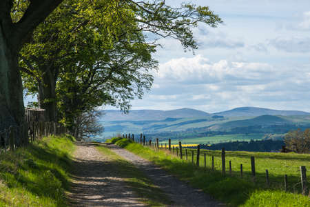 Tree Lined Country Lane and Cheviot Hills , Northumberland , England