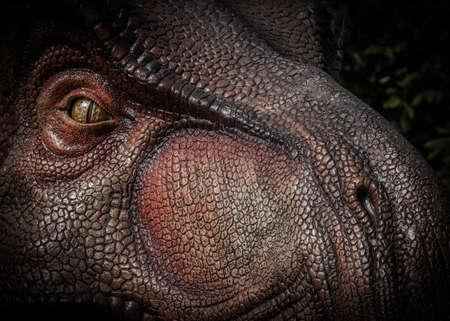 rex: Tyrannosaurus Rex