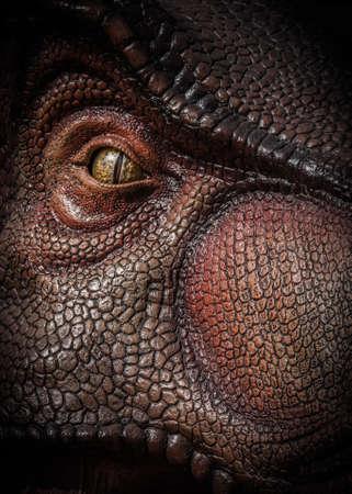 tyrannosaurus rex: Tyrannosaurus Rex
