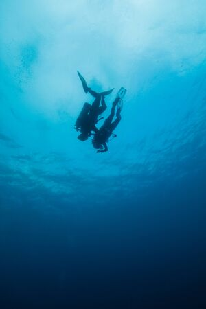 Scuba Divers swim together photo