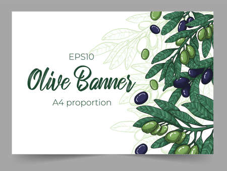 Horizontal banners template with colorful black and green olive with line art illustration of olives branch on white background. Cope space for your text. Background with olive tree twig, leaves and berries. Illustration