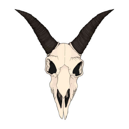Hand drawn vector colorful illustration of goat skull Isolated on white background. Outline ram cranium in color.