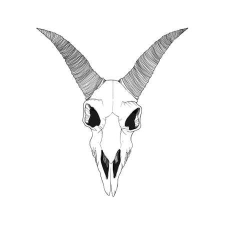 Hand drawn vector illustration of goat skull in line work. Isolated on white background. Outline ram cranium in black and white.  Çizim