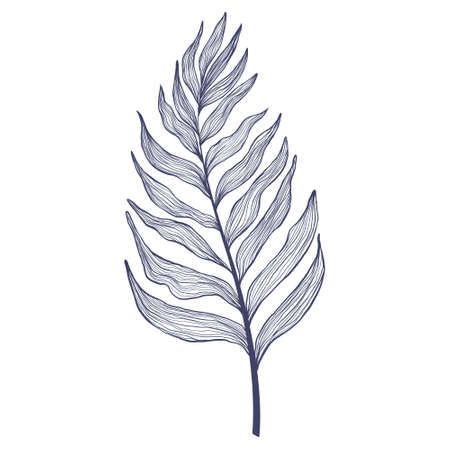 Hand drawn single palm tree leaves in linear style. Minimalistic trendy tropical palm leaf in contour design. Vector illustration of exotics plant isolated on white background. Vecteurs