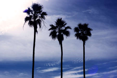Three palm trees in order of height in a blue sky with some clouds Foto de archivo