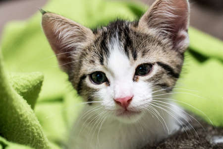 White baby kitty on a green blanket