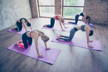 Positie van de kat, omhoog! Vijf jonge sportsporters trainen in de moderne studio op paarse matten, in een trendy outfit en blootsvoets, geconcentreerd en buigzaam
