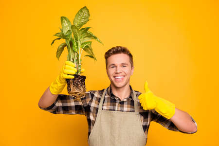 Pottery agricultural hands hold dieffenbachia joy finished perfect ideal excellent people person concept. Portrait of satisfied glad excited florist showing finger-up symbol isolated on background