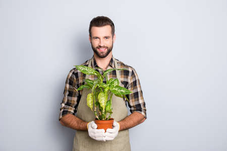 Portrait of cheerful brunet  florist with stubble in shirt and apron showing, having house plant, diffenbachia in pot looking at camera isolated on grey background Reklamní fotografie