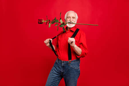Portrait of his he nice attractive funny cheerful glad positive gray-haired man holding in mouth rose pulling suspenders having fun isolated over bright vivid shine vibrant red background