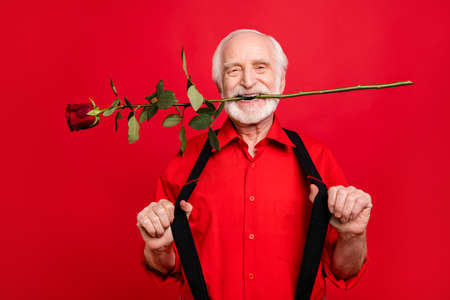 Close-up portrait of his he nice attractive cool trendy cheerful cheery positive gray-haired man holding in mouth fresh rose pulling suspenders isolated over bright vivid shine vibrant red background