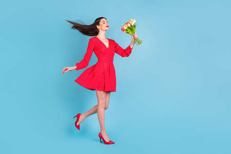 Full length body size view of lovely dreamy cheerful girl holding smelling tulips walking isolated over bright blue color background 写真素材