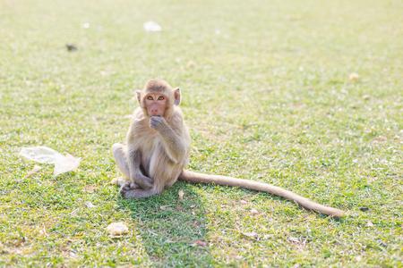 The monkey is eating food , Lopburi Thailand