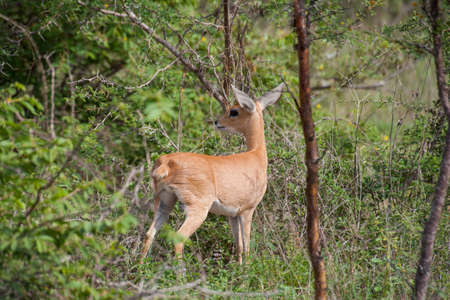 Kruger National Park, Mpumalanga, South Africa Stock Photo